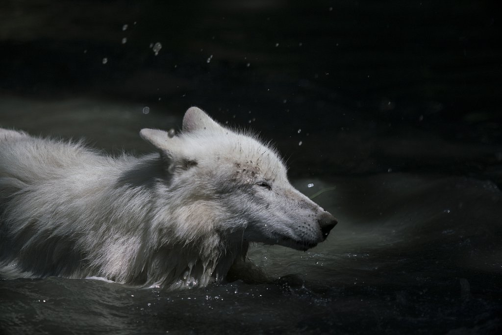 Wolf-19.jpg
